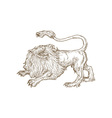 Angry lion roaring looking up viewed from the side vector image vector image