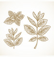 hand drawn mint branches with leaves sketch vector image