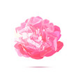 realistic pink peony flower isolated vector image vector image
