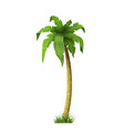 palm tree botanical exotic tropical plants on a vector image