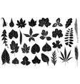 different leaves vector image vector image