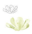 echeveria runyonii rosette succulent stone rose vector image vector image