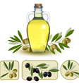 Bottle of oil with green olives and olive oil vector image