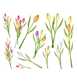 A Set of Fresh Tulip Flowers on White Background vector image