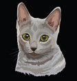 colored russian blue cat vector image vector image
