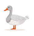 Domestic goose poultry breeding vector image