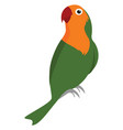 green parrot on white background vector image vector image