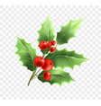 christmas holly twig realistic vector image vector image