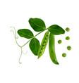 colorful realistic 3d pod ripe green peas vector image vector image