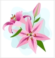 Pink Lilies on a Blue Background vector image