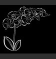 white orchid flowers on a black background vector image