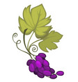 wine grapes cut fruit with leaves and swirling vector image vector image