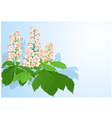 Background with chestnut flowers vector image vector image
