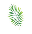 flat abstract green fern plant icon vector image vector image