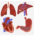 Human internal organs set vector image
