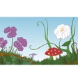 Flowers grass and mushroom on the meadow vector image