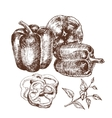Hand drawn set of bell peppers vector image vector image