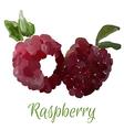 isolated raspberry vector image vector image