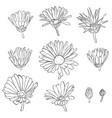 set drawing calendula flowers vector image
