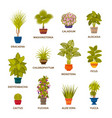 decorative houseplants in pots set florist indoor vector image vector image