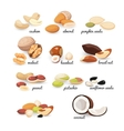 Set of various nuts and seeds vector image vector image