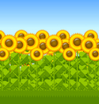 Sunflower field vector image