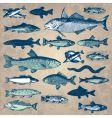 vintage fish set vector image