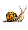Colored hand drawing a snail vector image vector image