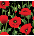 poppies and green leaves vector image