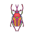 Colorful Scarab Beetle Bug Insect vector image