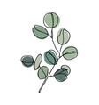 eucalyptus branch in modern single line art style vector image vector image