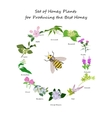 planty set for produsing the best honey vector image vector image