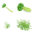 set of celery and dill in realistic style vector image vector image