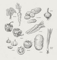 vegetables collection vector image vector image