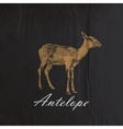 vintage of an antelope or goat on the old wr vector image vector image