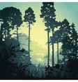 forest in the morning vector image vector image
