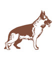 isolated german shepherd in hand drawn style vector image