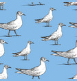 pattern walking seagulls vector image vector image