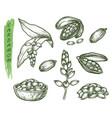 sketch cardamom herbs and spice seasoning set vector image vector image