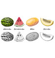 hand-drawn set of melon and watermelon in color vector image vector image
