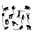 ape and monkey collection - silhouette vector image vector image