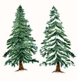 set christmas trees green fur trees in hand drawn vector image