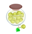 Jar of Pikled Solanum Ferox in Malt Vinegar vector image vector image