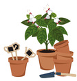 room flower and flower pots vector image vector image