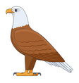 american bald eagle bird on a white background vector image vector image