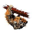 Colored hand drawing a Sunda slow loris vector image vector image