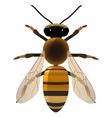 golden bee vector image vector image