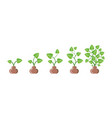 plants growing in pots in row domestic leaves vector image