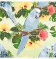 seamless texture birds budgerigars on a branch vector image vector image