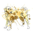 Colored hand drawing Labrador vector image